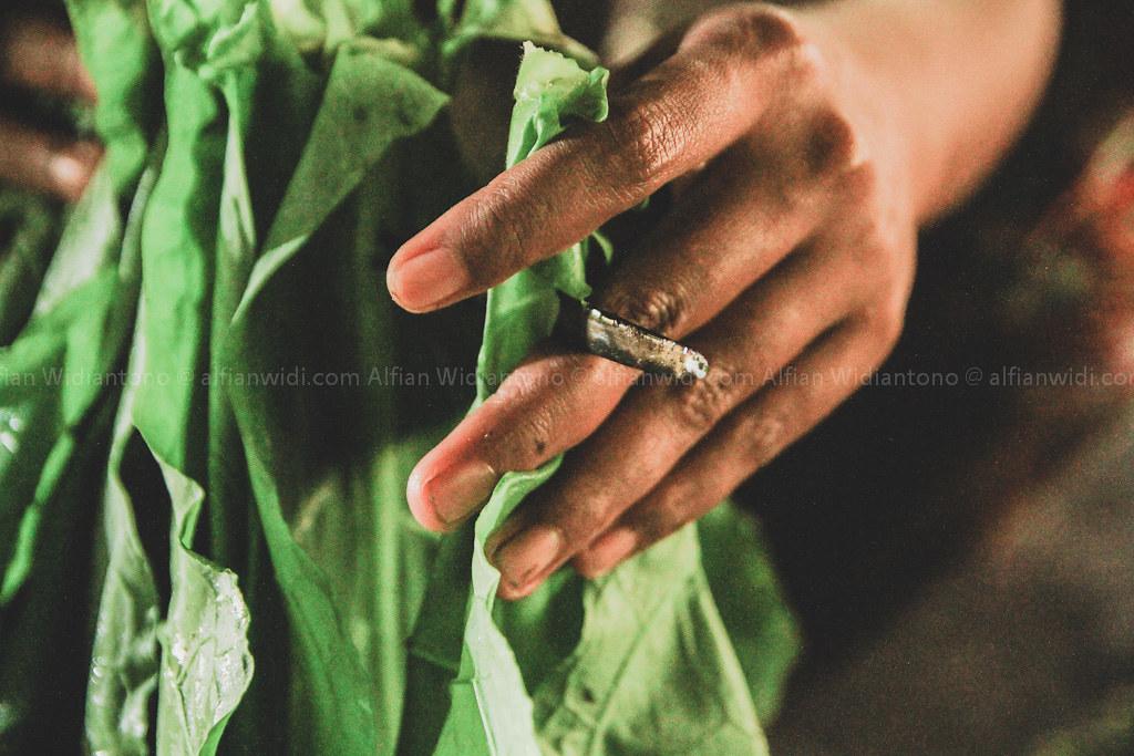 tembakau jember