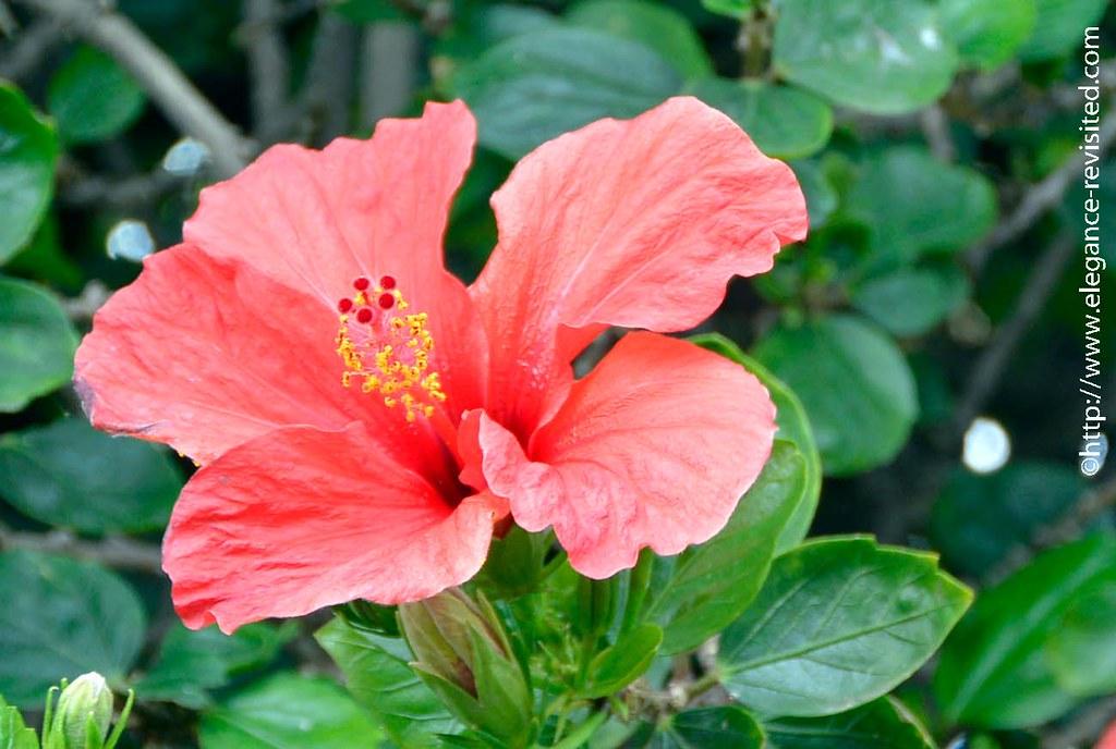 Madeira flowers