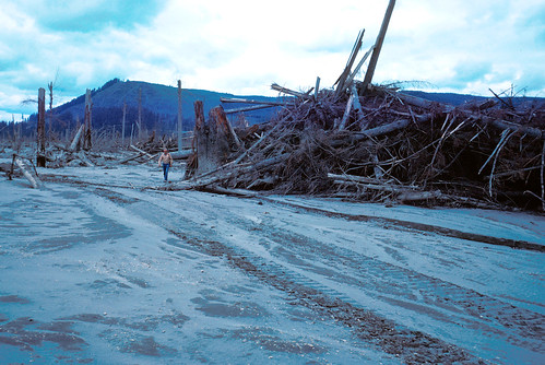 Color image shows a flat gray stretch of ash with tire tracks in it at the bottom and bottom left of the photo. Along the middle of the photo, from left to right, a stand of dead, limbless trees gives way to an enormous jumbled pile of logs. In the center of the photo, Rocky Crandall strides from around the pile. He's a silver-haired man wearing a tan jacket and blue jeans. A ridge rises in the background.