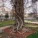 Botanical garden, Sofia