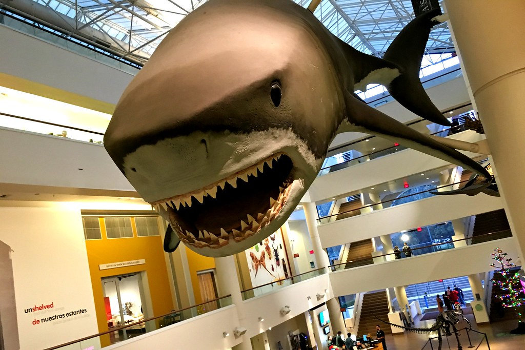 San Diego Museum Of Natural History Jobs