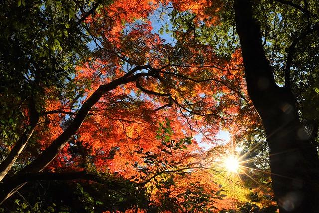 紅葉と太陽の光