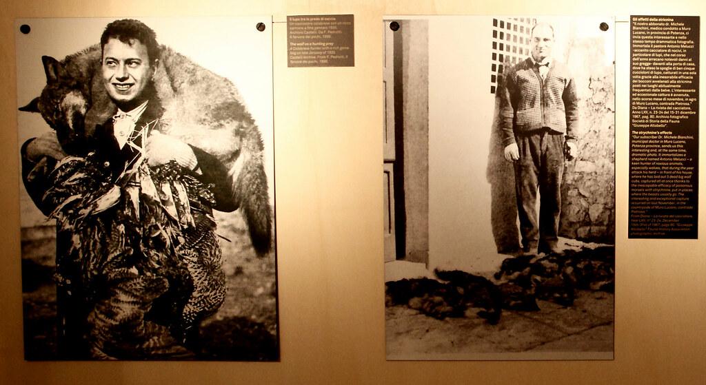 展覽中19世紀中葉資料。左圖為當時被視為英雄的獵狼獵人,右圖下方是一窩幼狼屍體,均死於毒餌。攝影者:李若韻