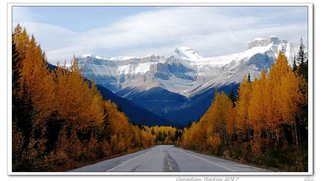 加拿大落基山三周秋遊3-- 冰原大道和黃頭大道的漂亮秋色