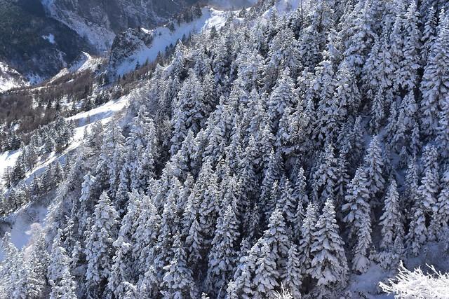 浅間山の樹氷