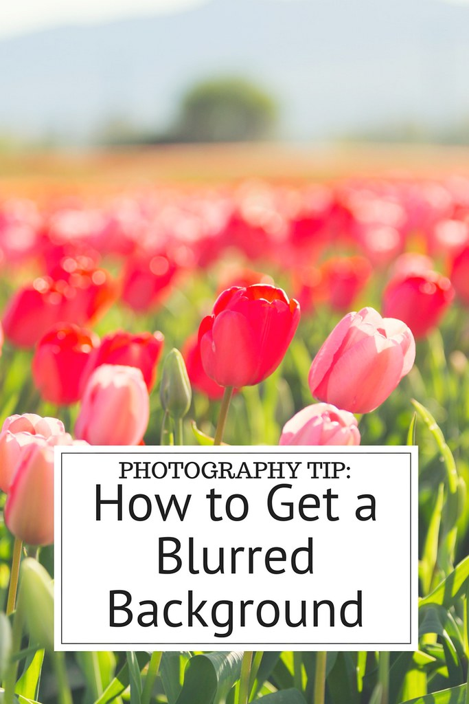 How to get a blurred background in your photos