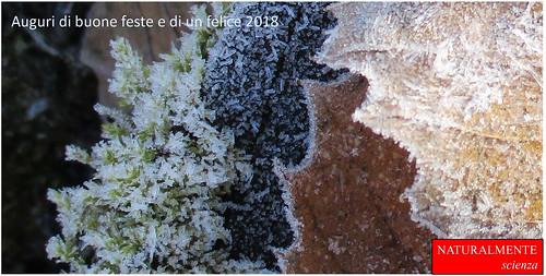 manto di foglie gelate (foto Maria Castelli)