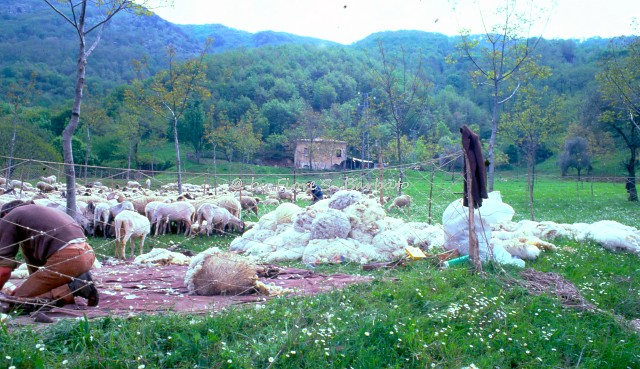 Fiori Bagnoli Irpino : Bagnoli irpino av xxxvii sagra della castagna e du flickr