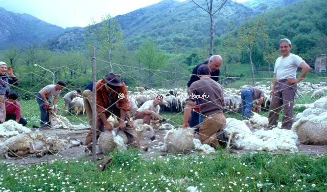 Fiori Bagnoli Irpino : Bagnoli irpino av 1979 la tosa primaverile delle pecoru2026 flickr