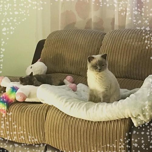 cozy Tonight's #cute #cat sofa...