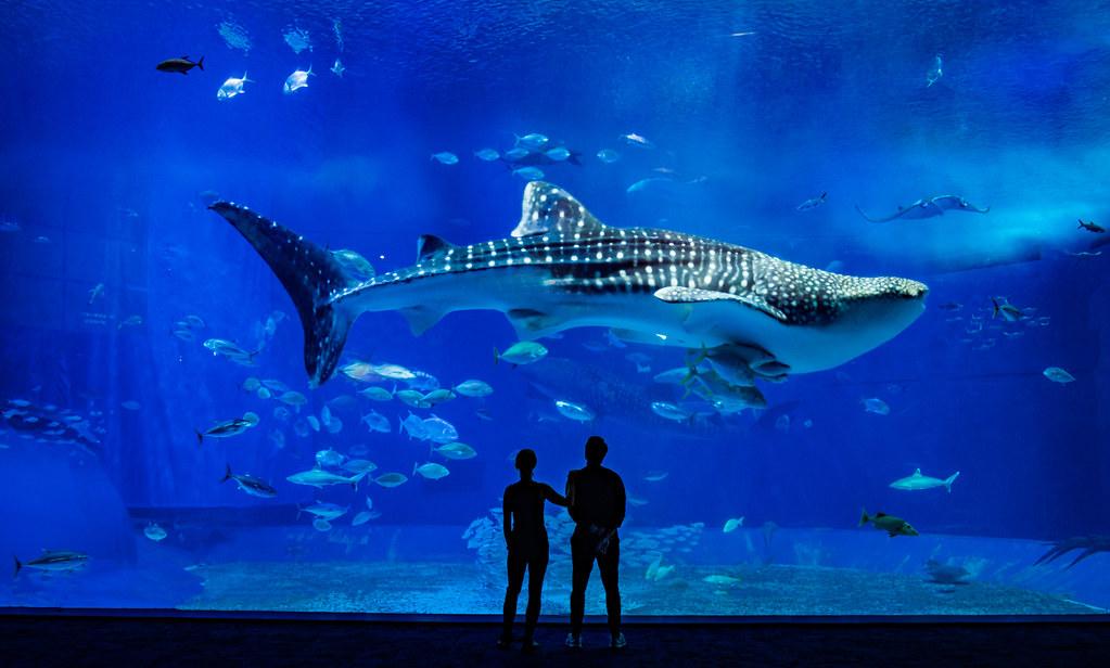 Best Whale Shark Tour Holbox