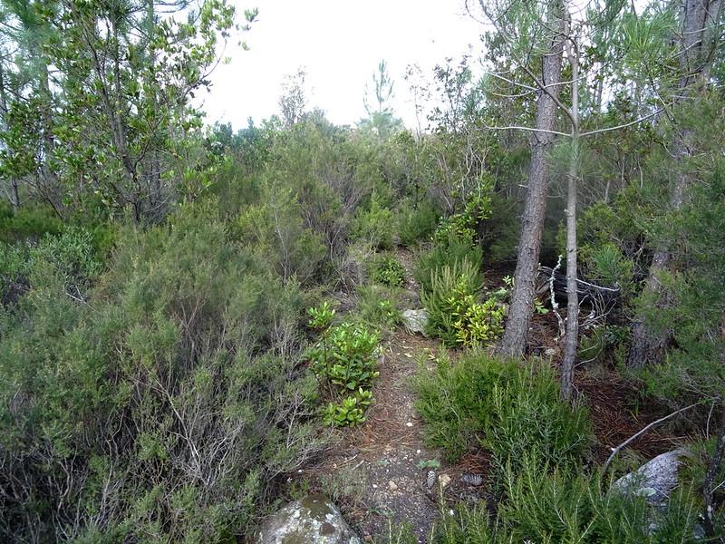 Le sentier de descente de Cinaghja vers la source