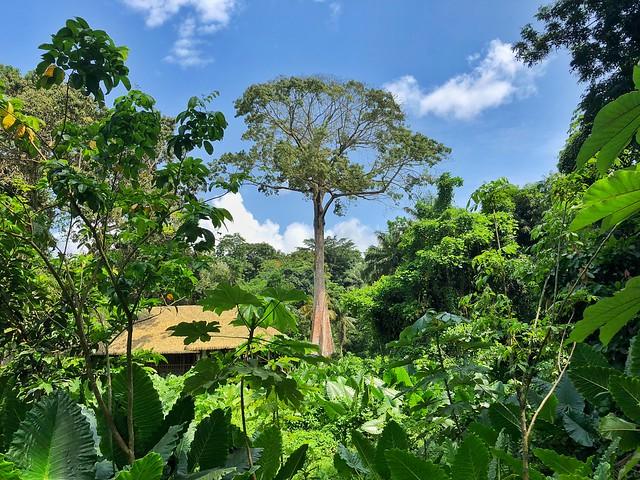 Paisaje en Príncipe (Santo Tomé y Príncipe)