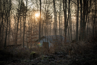 Sunrise Through Misty, Leafless Woods Over Grindbygg Workshop | by goingslowly