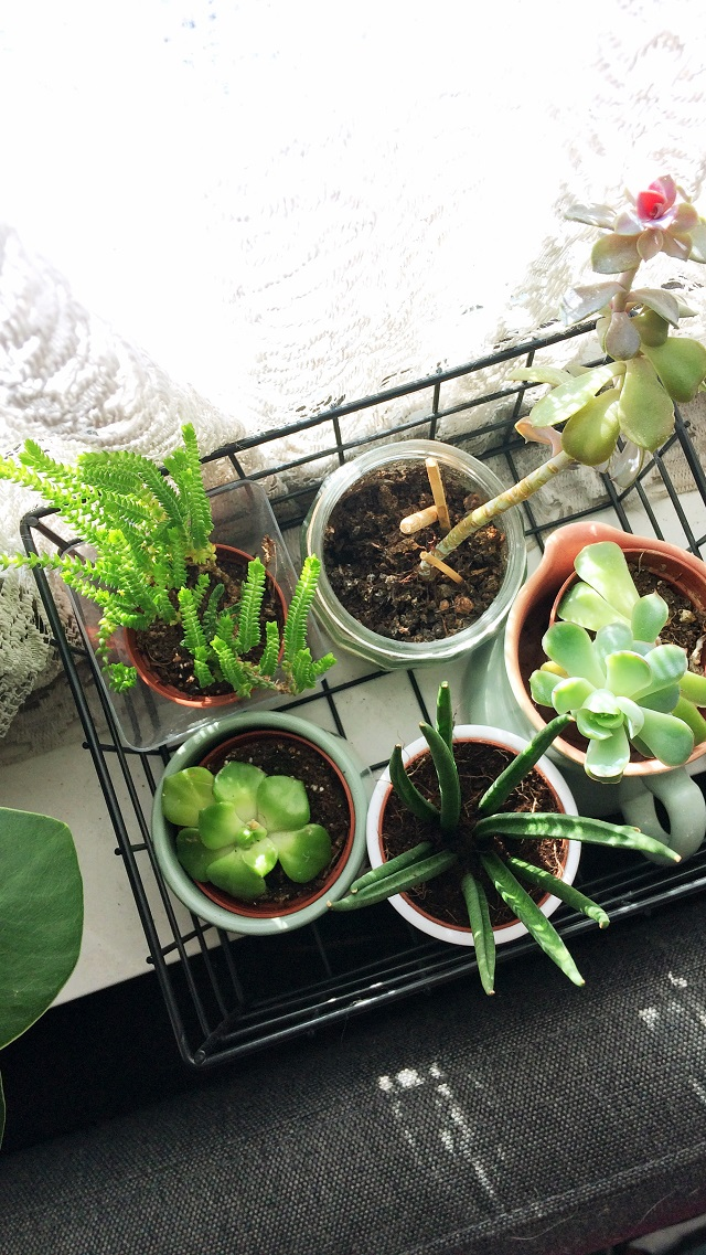 an assortment of succulents in wire tray