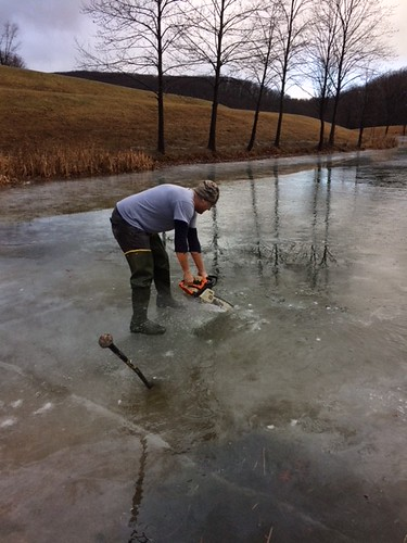 Photo of trout stocking in ice