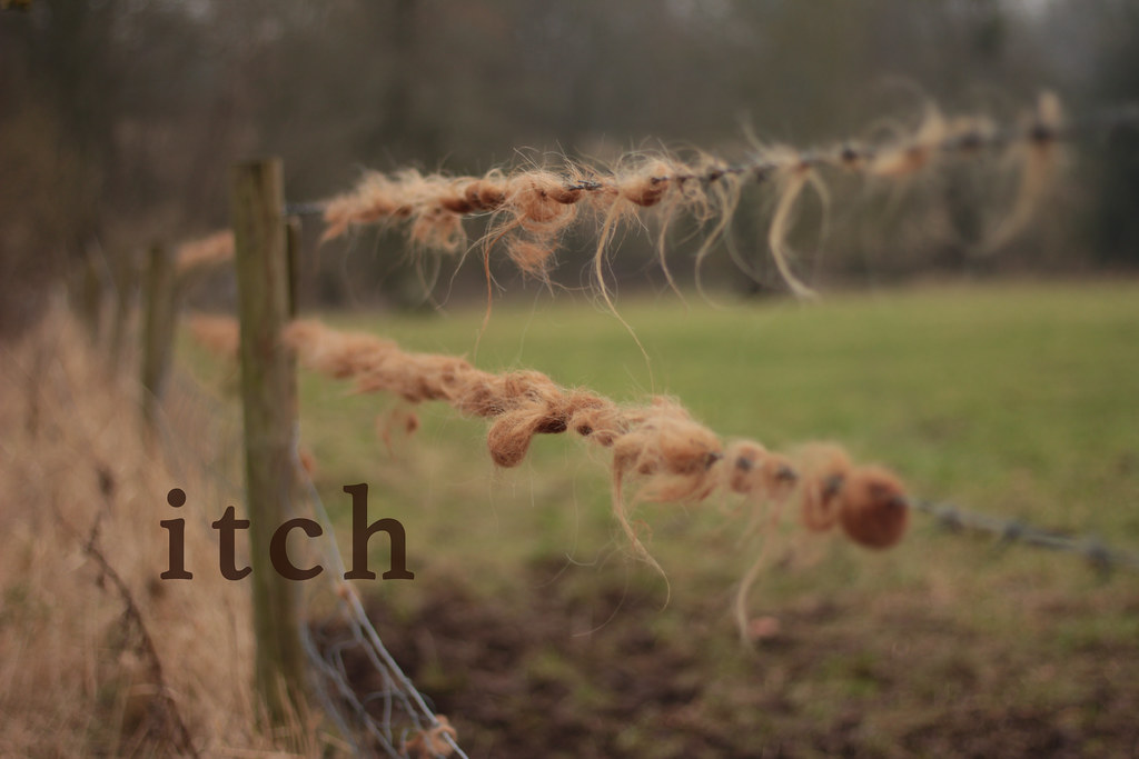 barbed wire fence cattle. itch: highland cattle who\u0027ve scratched that itch on a barbed wire fence in