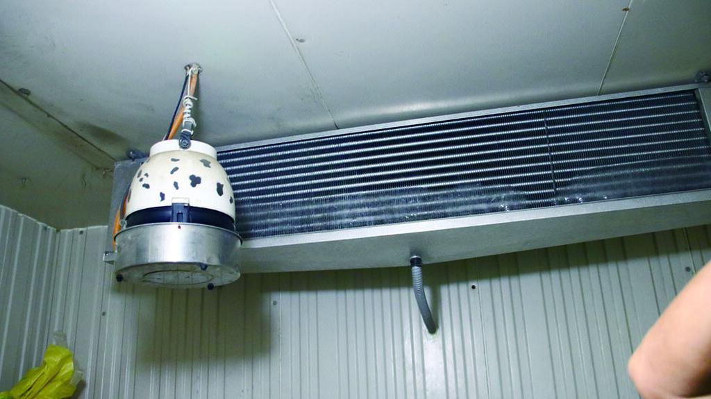 新型的冷藏庫,天花板的銅管採滲透式,冷空氣遇到熱空氣會轉換成水蒸氣,讓水蒸氣慢慢下沉,溫度緩慢下降,紅蘿蔔不易失水,可維持冷藏品質。