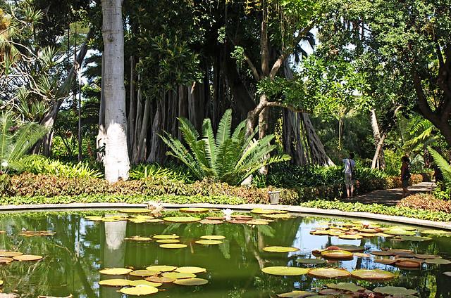 Botanic Gardens, La Paz, Puerto de la Cruz, Tenerife