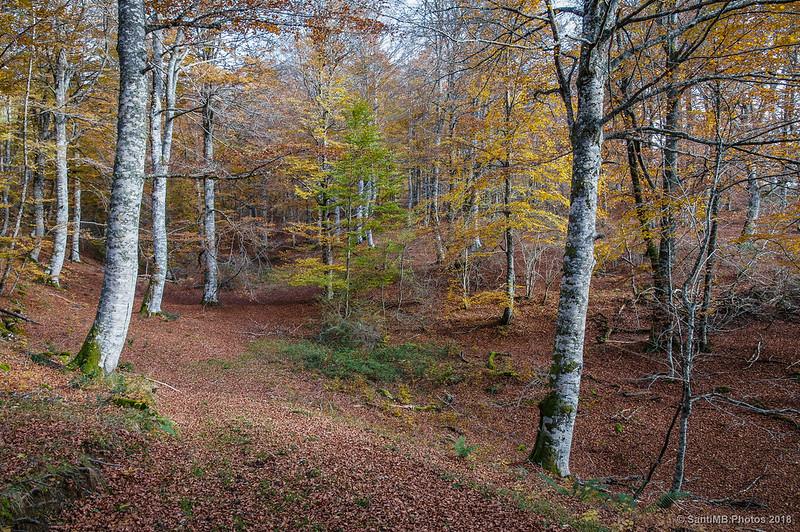 Saliendo del bosque de Olaberta