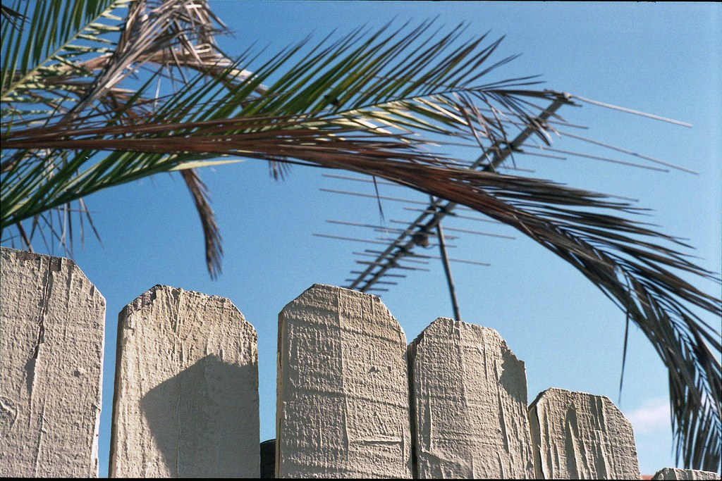 Palm fence antenna | by ADMurr