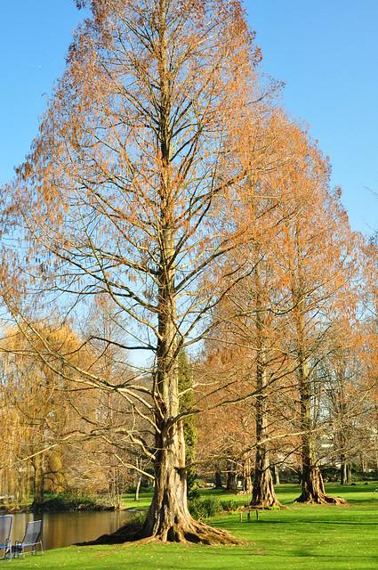 Herzogenriedpark Mannheim: Februar-Impressionen ... Foto: Brigitte Stolle 2018