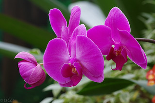 Orchid | by longtailcatyb