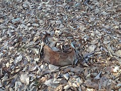 Old Metal Washtub