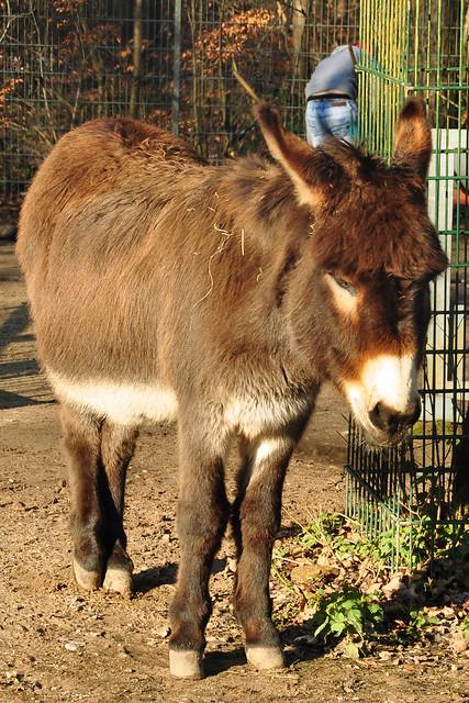 Tierpark Walldorf im Februar 2018 / Foto: Brigitte Stolle - Esel