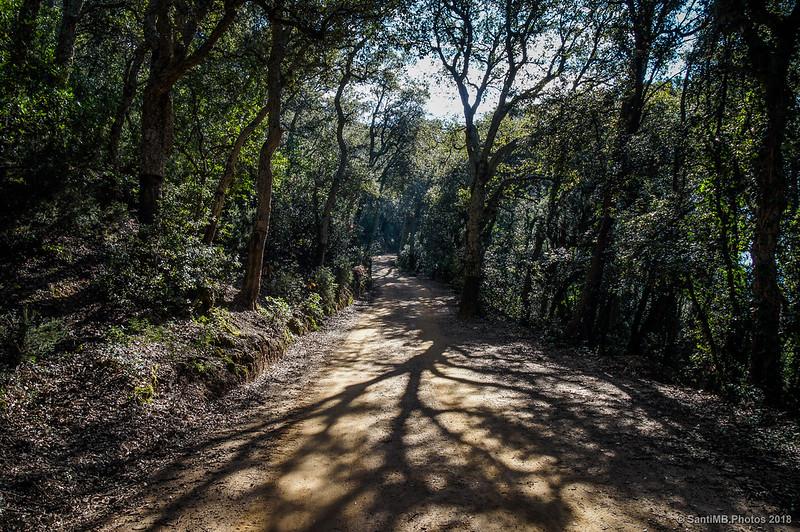 Bajando del Castell de Montsoriu por la pista