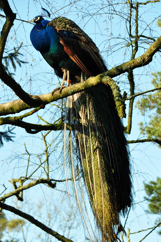 Tierpark Walldorf im Februar 2018 / Foto: Brigitte Stolle - Pfau