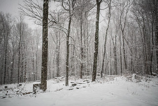 Snowy Woodland with Snow Falling | by goingslowly