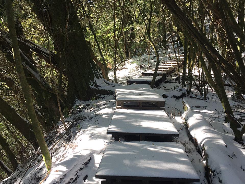 新佳陽黑森林步道 冬景