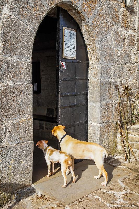 Perros esperando en la entrada a San Miguel de Aralar