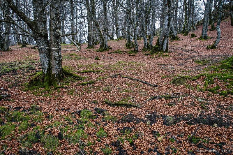 Atravesando el bosque cerca de San Adrián de Lizarraga