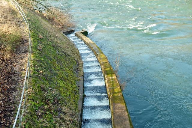 Die Mannheimer Maulbeerinsel im März 2018 --- Neckar, Neckarkanal, Naturschutzgebiet, Fischtreppe ... Foto: Brigitte Stolle