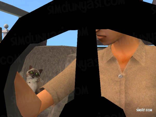 The Sims 2 Pets Cats Jobs İşe Giden Kedi