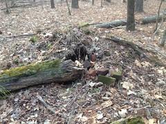 Sugar Hill Mining Camp - Brick Pile