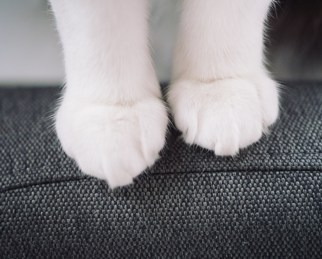 white cats paws close up