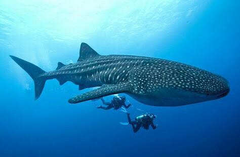 Viaje de buceo a Maldivas