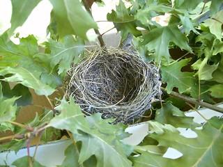 nido tondo su quercia rossa