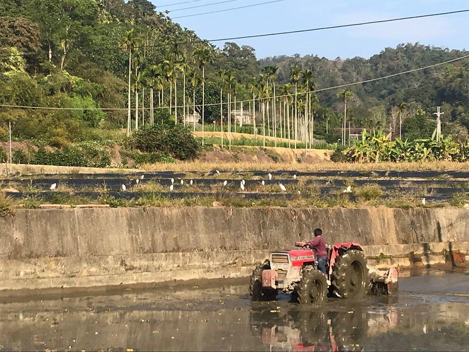 台灣白魚與農業區的關係。圖片來源:王堯弘。