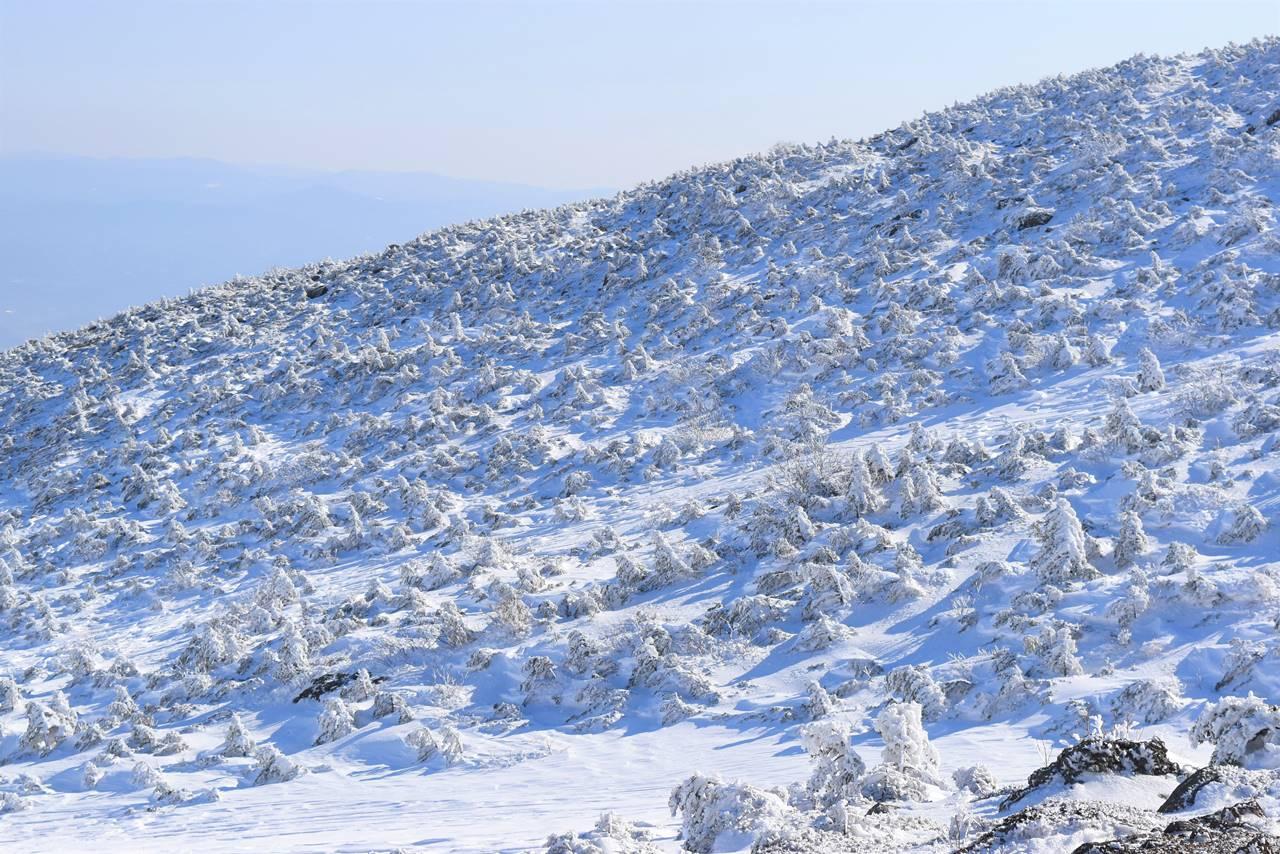 冬の安達太良山 リトルスノーモンスター