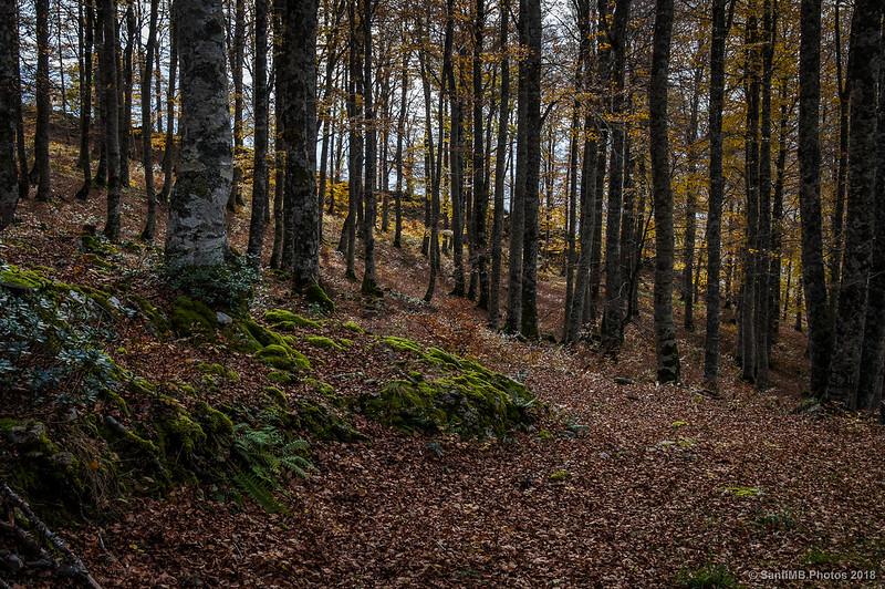Bajando hacia el dolmen de Olaberta