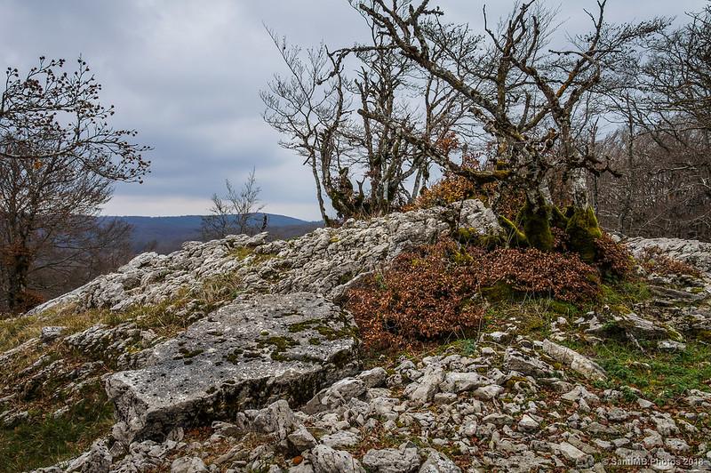 Arbustos creciendo sobre rocas en el camino a Eskitza