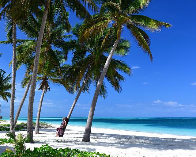 A la sombra de una de las palmeras de Cayo Levisa en Cuba