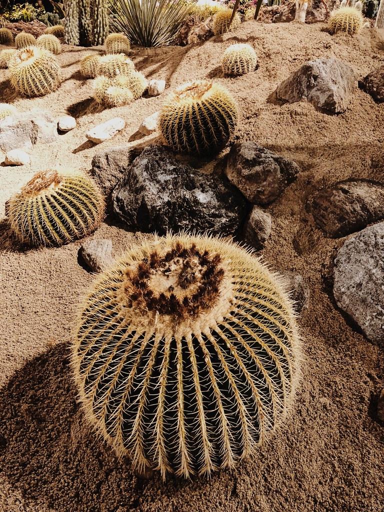 Philadelphia Flower Show cactus