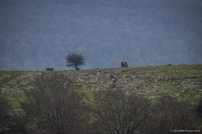 Caballos paciendo en Urbasa-Andía