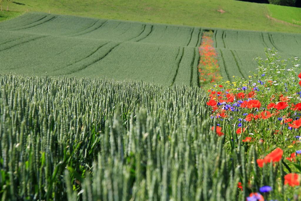 圖片來源:Agroscope, Matthias Tschumi(CC BY-ND 2.0)