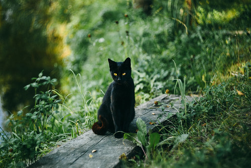 black_cat_at_the_pond | by youdev